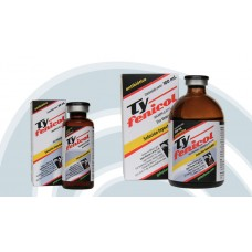Typhenicol 100ml - Antibiotic